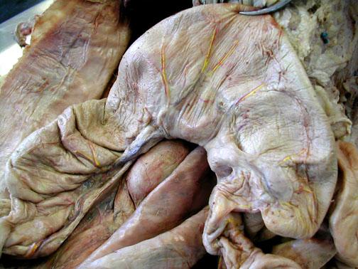 Cecum Cat | www.pixshark.com - Images Galleries With A Bite!