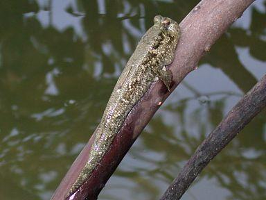 السمك يتسلق الأشجار تعال لنشاهد