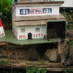 Ferral Cat Town in Bamfield