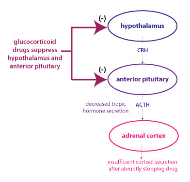 Cortisol Disorders Tropic hormones are hormones that have other endocrine glands as their target. courses washington edu